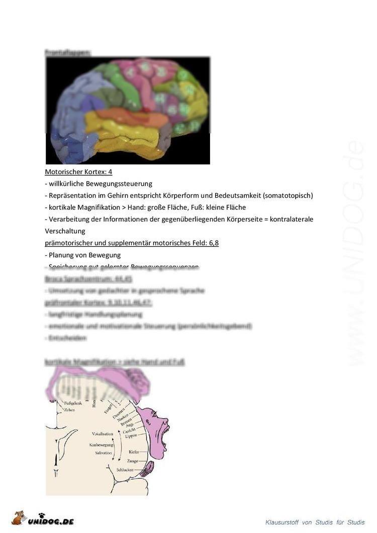 Ausgezeichnet Motorische Kortex Bilder - Physiologie Von ...